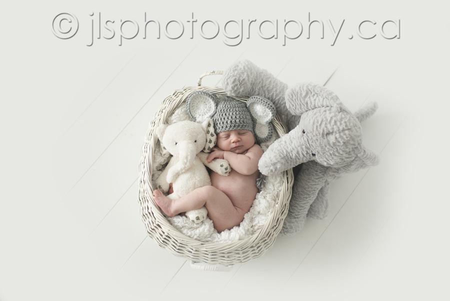 Newborn Photos Elephant Themed